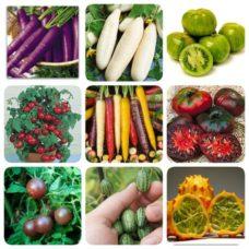 exotiska-grönsaker
