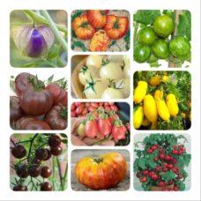 tomatpaketet